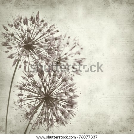 textured old paper background with allium