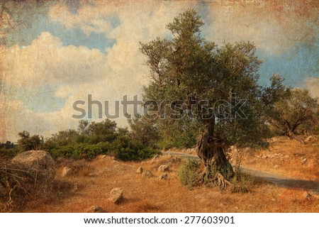 Textured old paper background with ancient olive tree. Bible landscape. Judaean Mountains, (Judaean Hills). Israel. Picture of Bible landscape in vintage style - stock photo