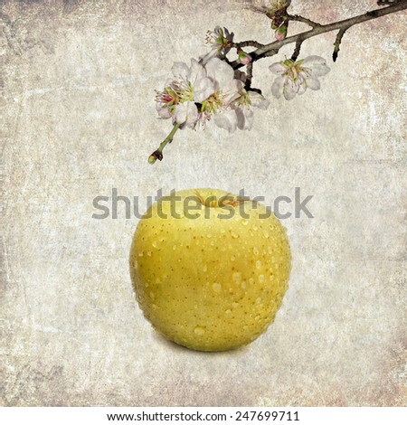 Textured old paper background with apple and blossom apple tree branch  - stock photo