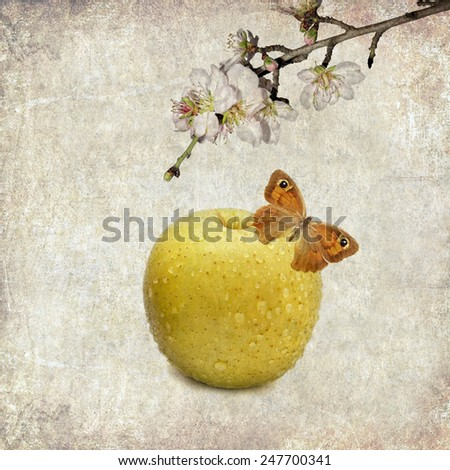 Textured old paper background with apple, blossom apple tree branch and butterfly - stock photo