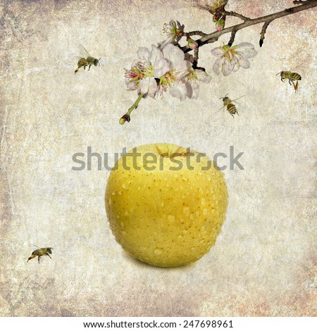 Textured old paper background with apple, blossom apple tree branch and honey bees - stock photo