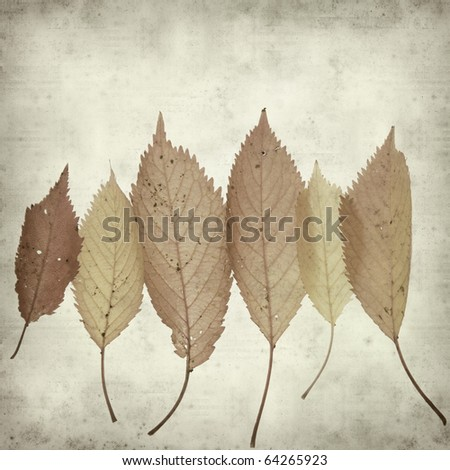 textured old paper background with autumnal leaves - stock photo