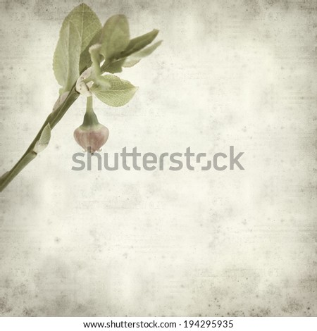 textured old paper background with bilberry flower