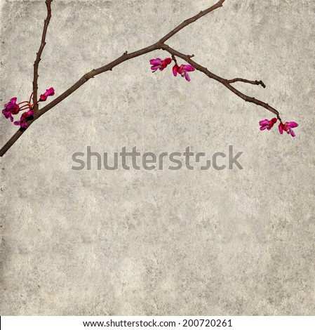 Textured old paper background with blossoming tree branch. Copy space is available - stock photo