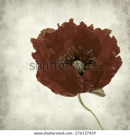 textured old paper background with bright red poppy flower - stock photo