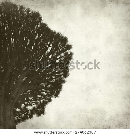 textured old paper background with Canary Islands Dragon Tree - stock photo