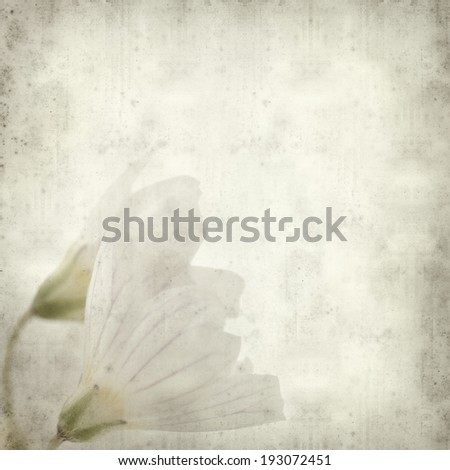 textured old paper background with common wood sorrel