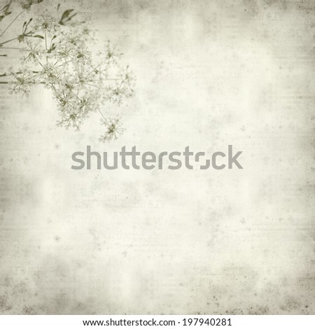 textured old paper background with cow parsley - stock photo