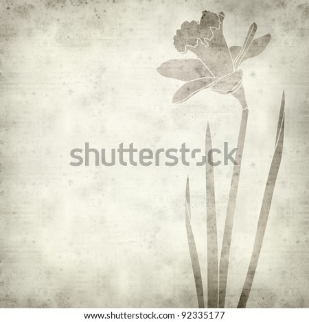 textured old paper background with daffodil drawing - stock photo