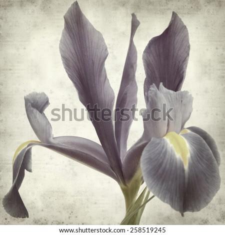 textured old paper background with dark pirple iris flowers - stock photo