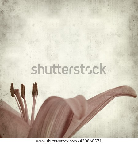 textured old paper background with dark red lily flower