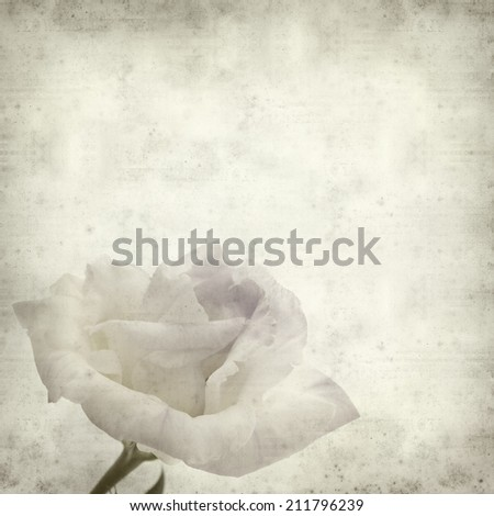 textured old paper background with double eustoma flower