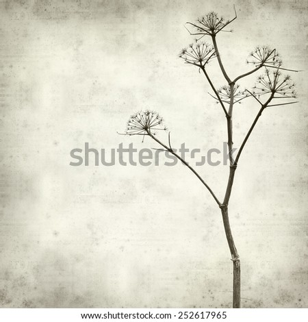 textured old paper background with dry dead fennel seed stalks  - stock photo