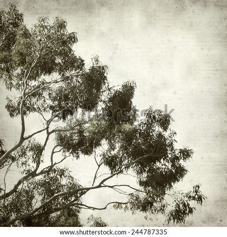 textured old paper background with eucalyptus tree - stock photo