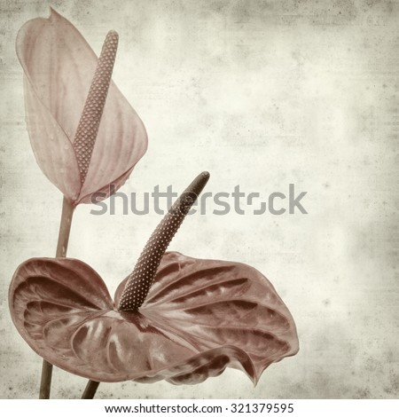 textured old paper background with exotic anthurium flower - stock photo