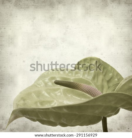 textured old paper background with green Anthurium flower - stock photo
