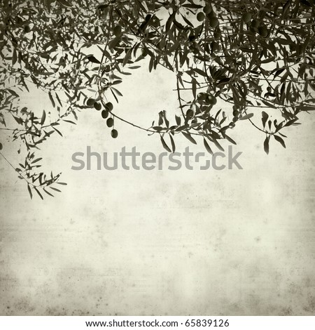 textured old paper background with green olives growing on branches - stock photo