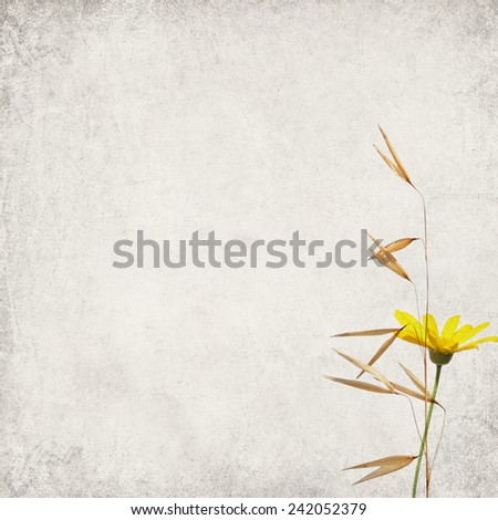 Textured old paper background with herbs  - stock photo