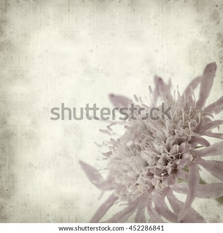 textured old paper background with mountain scabious flowers
