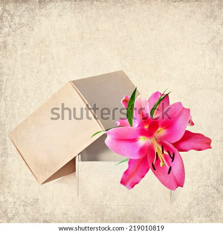 Textured old paper background with open gift box and lily flower