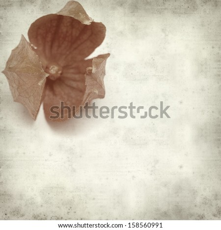 textured old paper background with orange autumnal physalis lantern