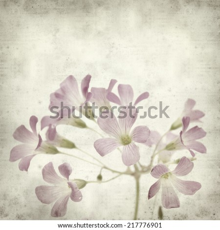 textured old paper background with Oxalis corymbosa