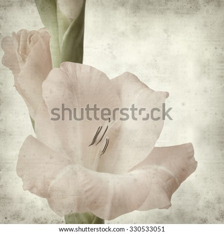 textured old paper background with pale gladiols flowering spike