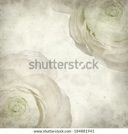 textured old paper background with pale pink ranunculus, persian buttercup