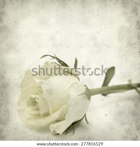 textured old paper background with pale yellow rose flower - stock photo
