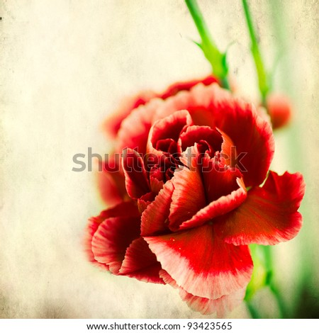 textured old paper background with red carnation - stock photo