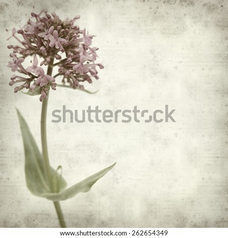 textured old paper background with red valerian - stock photo
