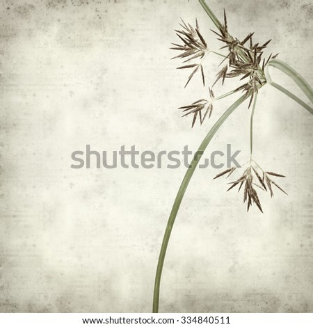 textured old paper background with sedge plant