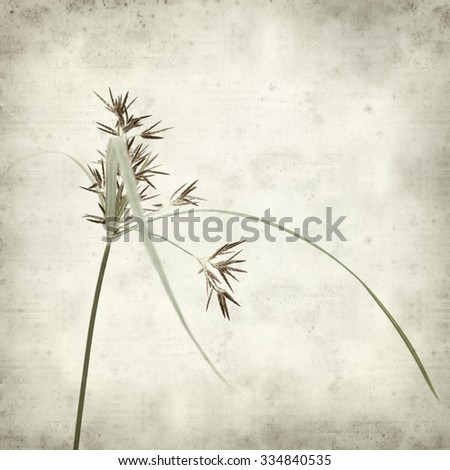 textured old paper background with sedge plant  - stock photo