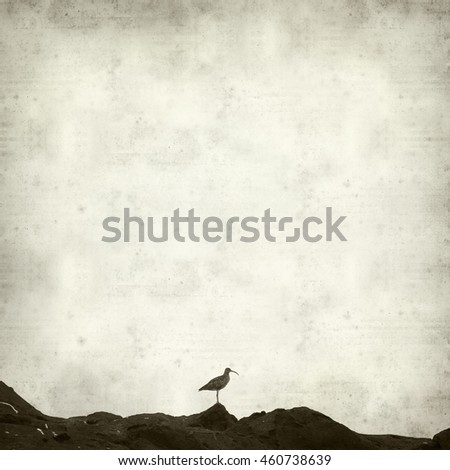 textured old paper background with slender-billed curlew birds