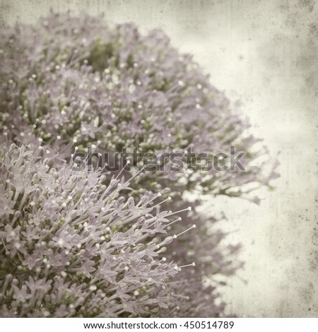 textured old paper background with small lilac pentas flowers