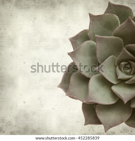 textured old paper background with succulent Aeonium plant