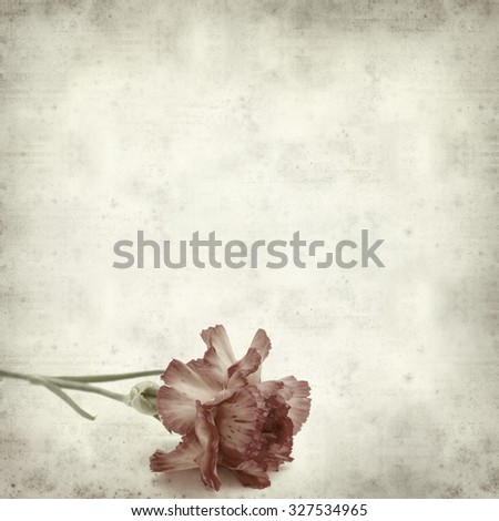 textured old paper background with variegated carnation flower - stock photo