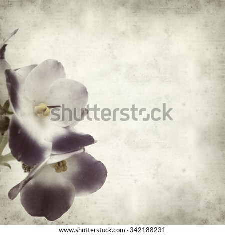 textured old paper background with white and blue african violet
