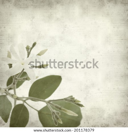 textured old paper background with white jasmine flower