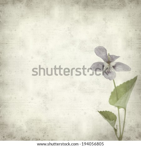 textured old paper background with wild violet