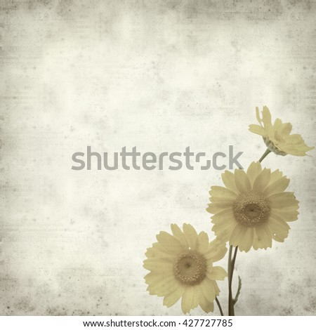 textured old paper background with yellow marguerite daisy
