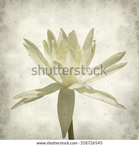 textured old paper background with yellow water lily - stock photo