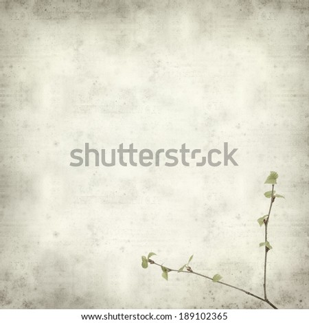 textured old paper background with young spring silver birch foliage - stock photo