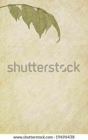 Textured paper background with a foliage of Wisteria. - stock photo