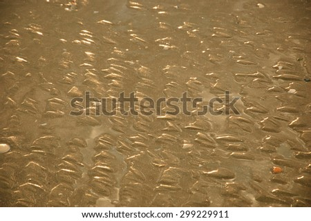 Textured seabed at low tide during the golden sunset (Normandy, France). Closeup.  - stock photo