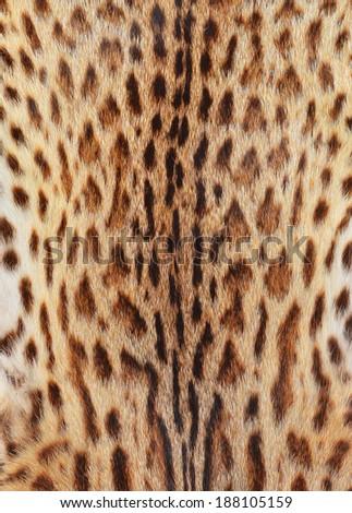 textured tiger pelt - stock photo