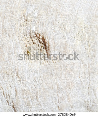 Textures fossils - stock photo