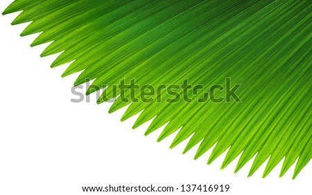 textures of Green Palm leaves on white background - stock photo