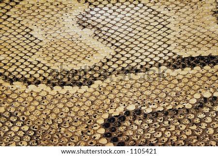 Textures – Snakeskin #04 - stock photo
