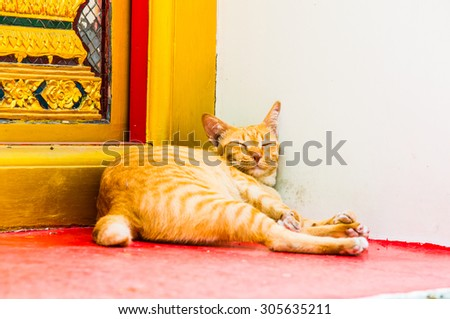 Thai cat at Thai temple, Thailand. - stock photo